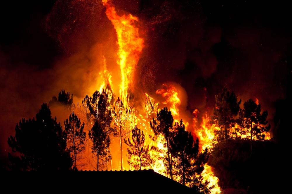 कैलिफोर्निया: जंगलों में लगी आग का कहर जारी, 2.5 लाख लोगों ने छोड़ा घर