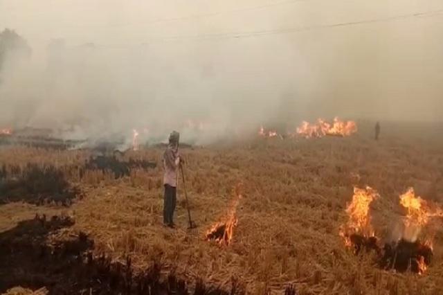 किसानों ने नहीं मानी PM की बात, नरेंद्र मोदी की अपील के बाद भी लगातार जला रहे पराली