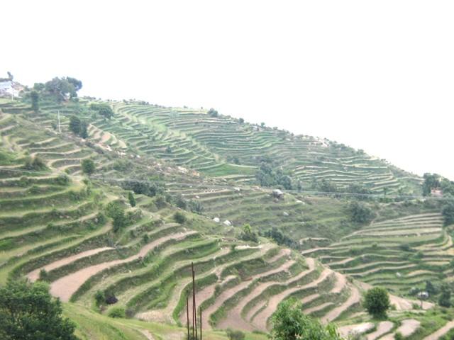 हिमाचल सरकार करवाएंगी पंडित दीनदयाल और डॉ. वाईएस परमार योजना का किसानों का सर्वे