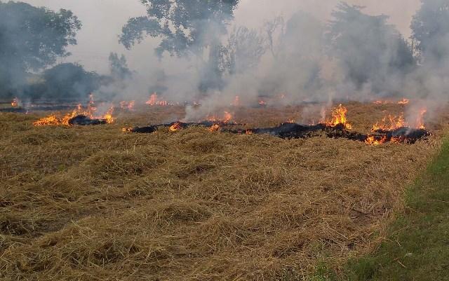 पंजाब के मोगा में पराली जलाने के मामले में 10 किसानों के खिलाफ केस दर्ज