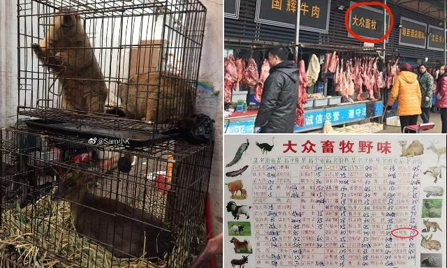 कोरोना वायरस पर जीत का जश्न मना रहा चीन, फिर से बिकने लगे चमगादड़