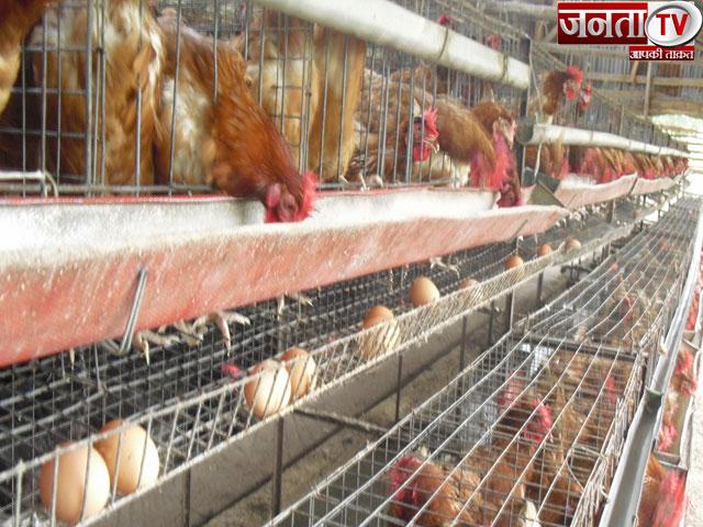 हरियाणा में बर्ड फ्लू का कहर, लॉकडाउन की मार झेल चुके मुर्गी व्यवसाय से जुड़े लोगों की बढ़ी मुश्किलें