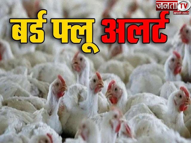 बर्ड फ्लू को लेकर अलर्ट मोड पर पशुपालन व डेयरिंग विभाग, मुर्गी फार्म मालिकों को सता रहा नुकसान का डर