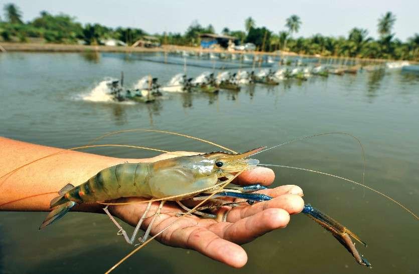 पंजाब का ये हिस्सा बनेगा झींगा मछली उत्पादन का हब, 3-5 लाख तक का होगा मुनाफा?h=220&mode=max