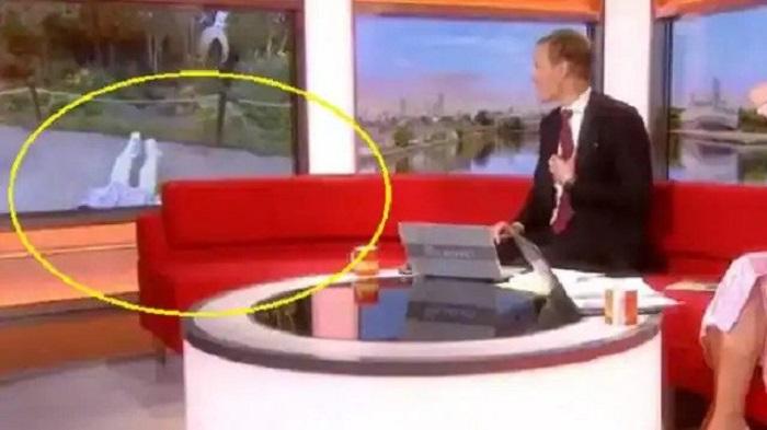 टीवी पर लाइव रिपोर्टर को अचानक कुत्ता घसीटने लगा, मुंह के बल गिरी