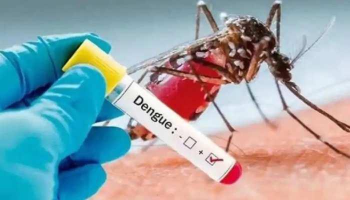 Dengue : डेंगू का कहर बढ़ा, पीजीआई में स्पेशल वार्ड बनाने की तैयारी