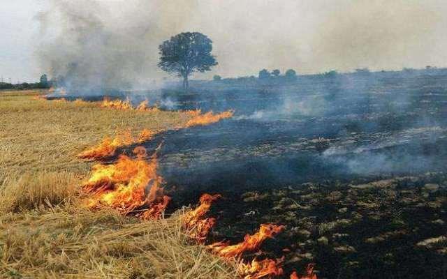 Haryana: अब पराली से बनाई जाएगी बिजली, हर घंटे होगा 15 मेगावाट बिजली का उत्पादन