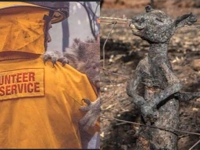 ऑस्ट्रेलिया के जंगलों में लगी आग के दिल दहला देने वाले दृष्य