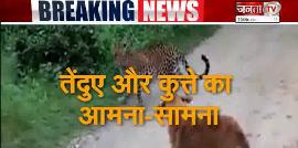 देखें क्या हुआ जब कुत्ते और तेंदुए का हुआ आमना सामना,चौंका देगा आपको यह VIDEO
